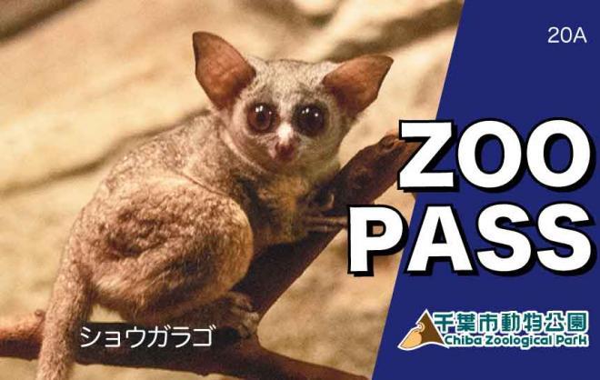 千葉市動物公園年間パスポート