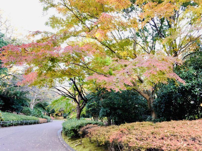 千葉市動物公園の正門脇紅葉